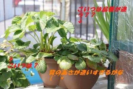 002_convert_20110329144503